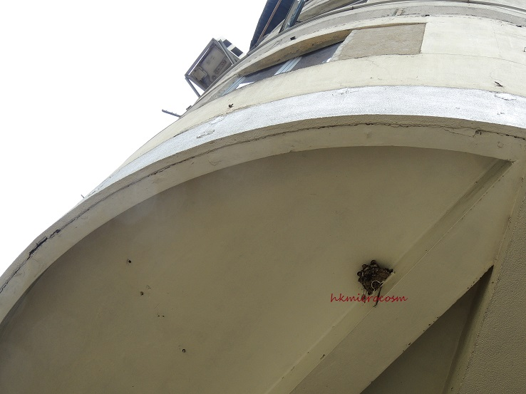 swallow nest 2013
